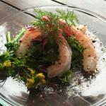 coastlife_shrimp_003